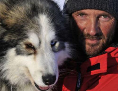 """""""Husky Toni"""" – a touching story"""